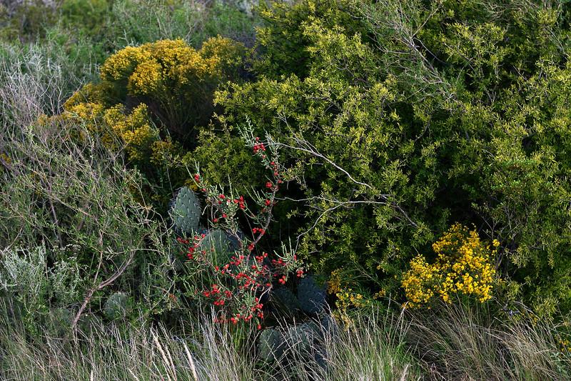 cactusflower00001_RJ.JPG