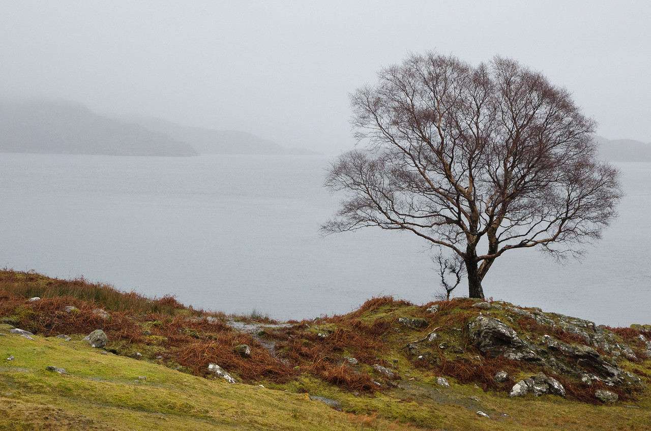 NC500 - Applecross - Lone tree by the red cottage