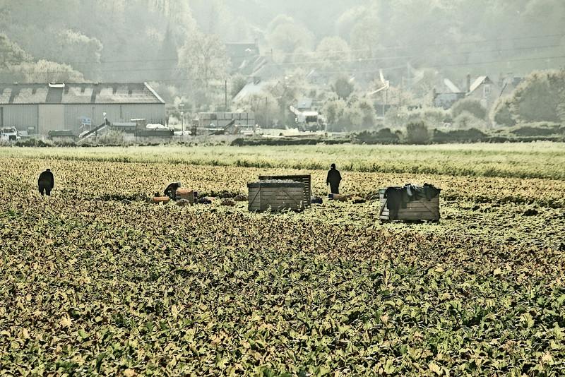 migrantworkers.jpg