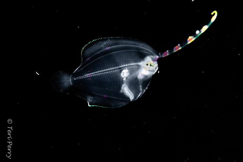 BLACKWATER - Flounder_DSC9446-Edit-2.jpg
