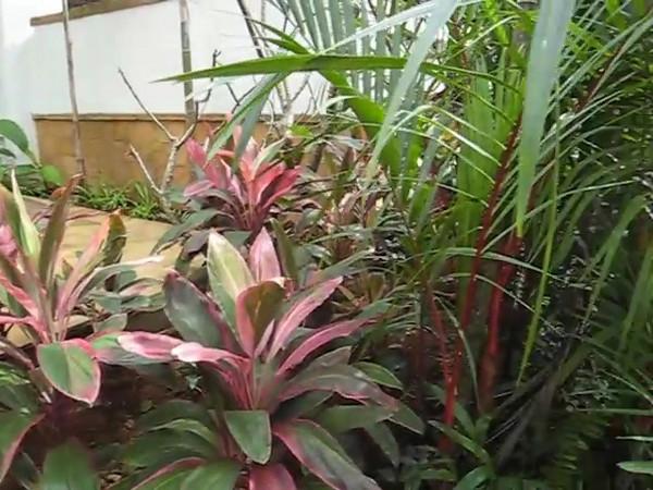 hotel_garden.avi
