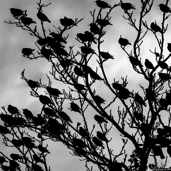 Birds at Dusk 4 of 4