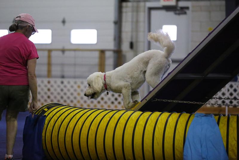 dogs_06142016-76.jpg