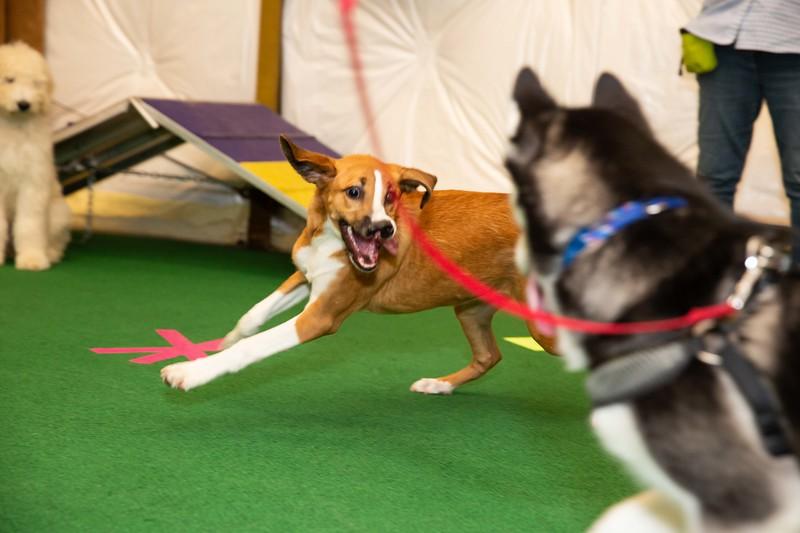 on Command dog Training June 2019-5208.jpg