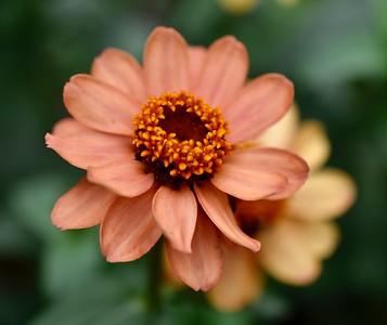 Tina's Flowers-9/7/17