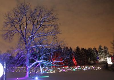 Morton Arboretum Illuminations 2015
