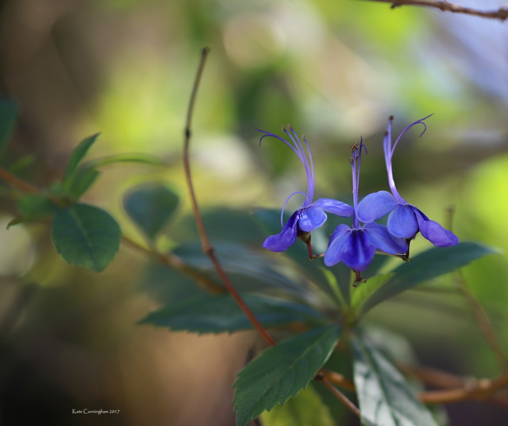 IMG_2882 Purple Flowers San Diego Zoo Close Up 12.28.2017 Signed.jpg