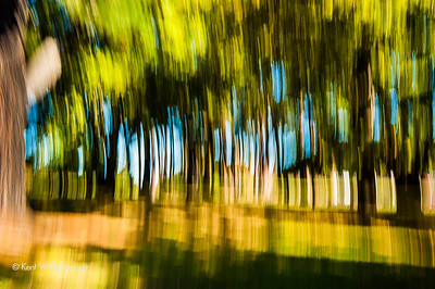 Redwoods in Motion, Hagley Park, Christchurch, New Zealand