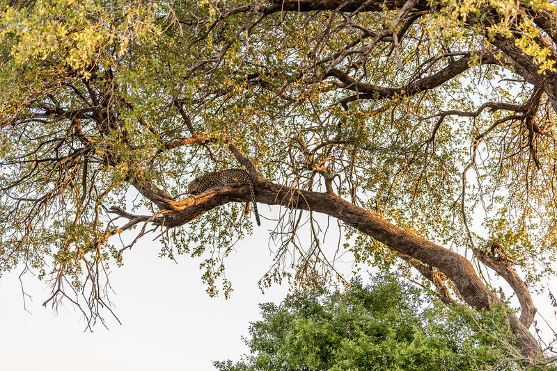 Botswana_June_2017 (3689 of 6179).jpg