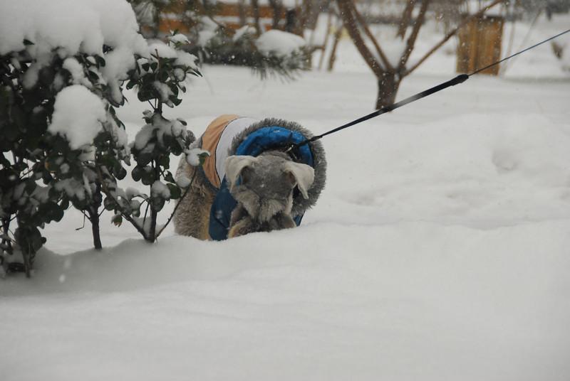 [20100103] 1st 2010 Snow in Beijing (31).JPG