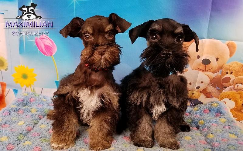 Jodie Pups 006.jpg