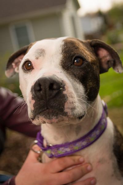 Sarah's Dog-9.jpg