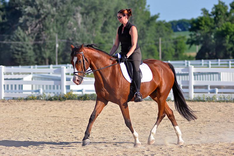 Horses July 2011 232a.jpg