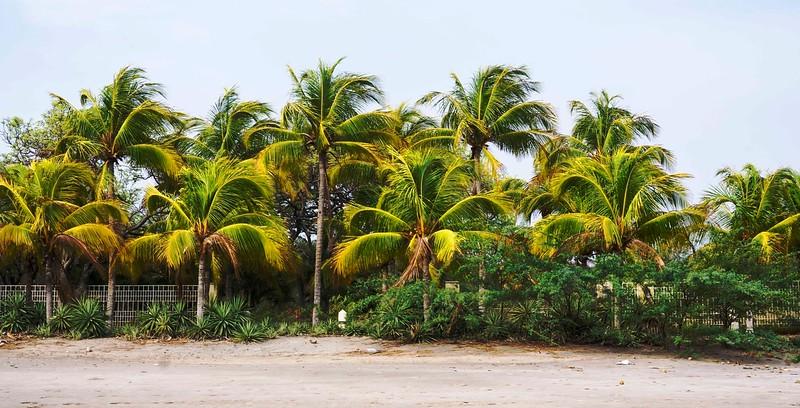 palmsonbeach.jpg