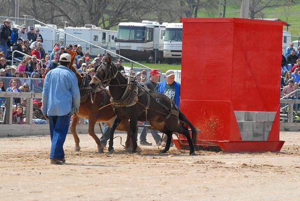 2014 Mule Pulling