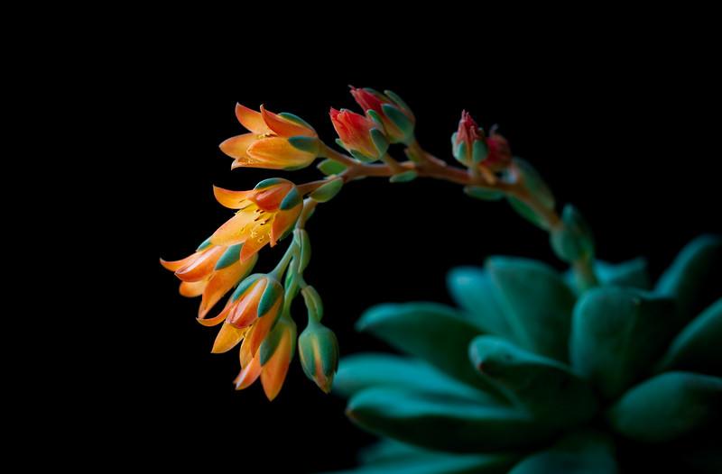 succulent flowers-7787.jpg