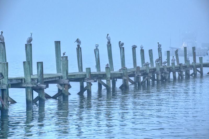 Cumberland Island-62.jpg