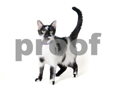 2016 September Cat Gallery