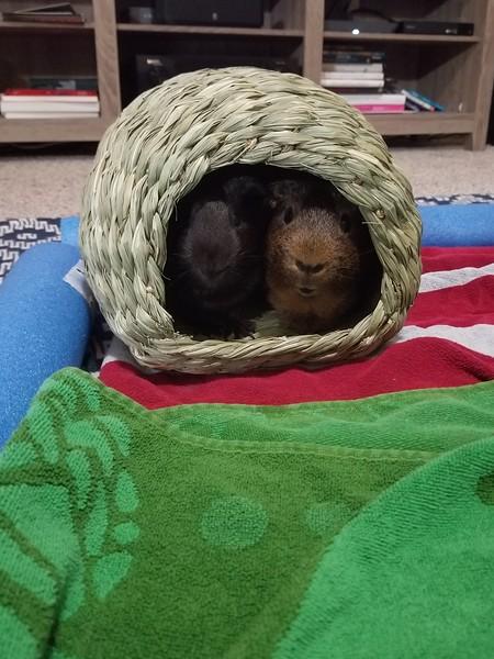 Brownie and Pellet