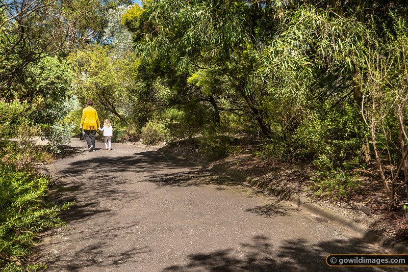 Maranoa Stroll