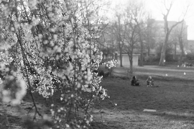 Leica-M4P-Fomapan400-April2018-1 (6).jpg