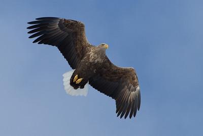 Eagle Season 2009/10