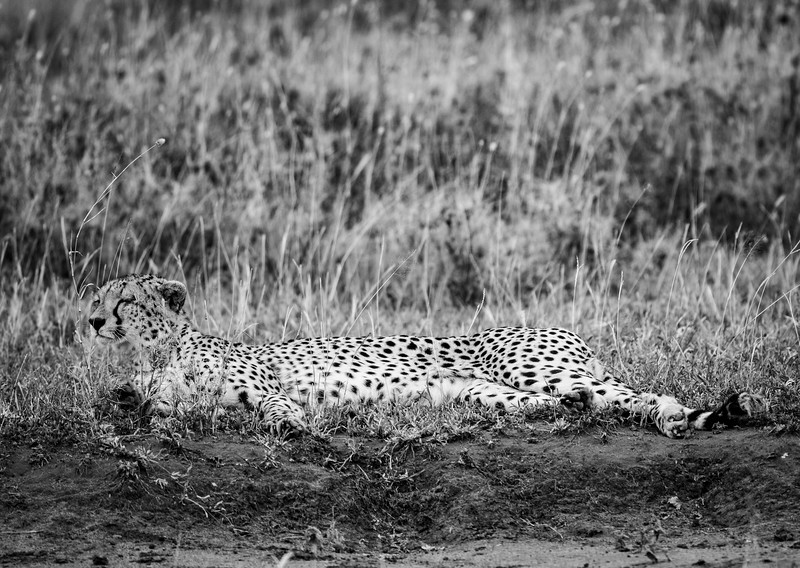 Tanzania_Feb_2018-1209.jpg