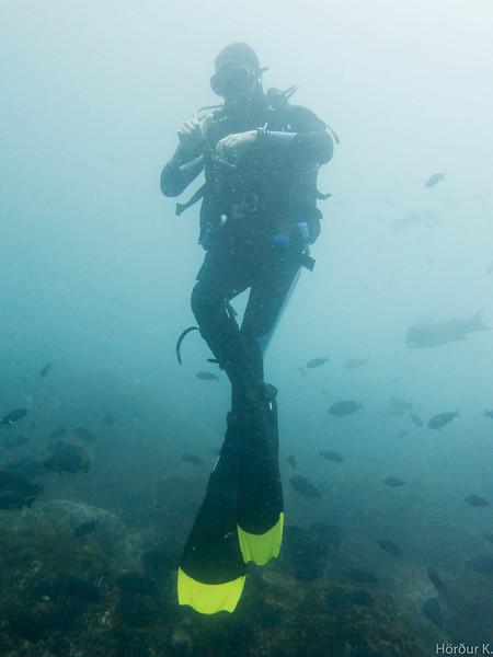 Yellowtip diver