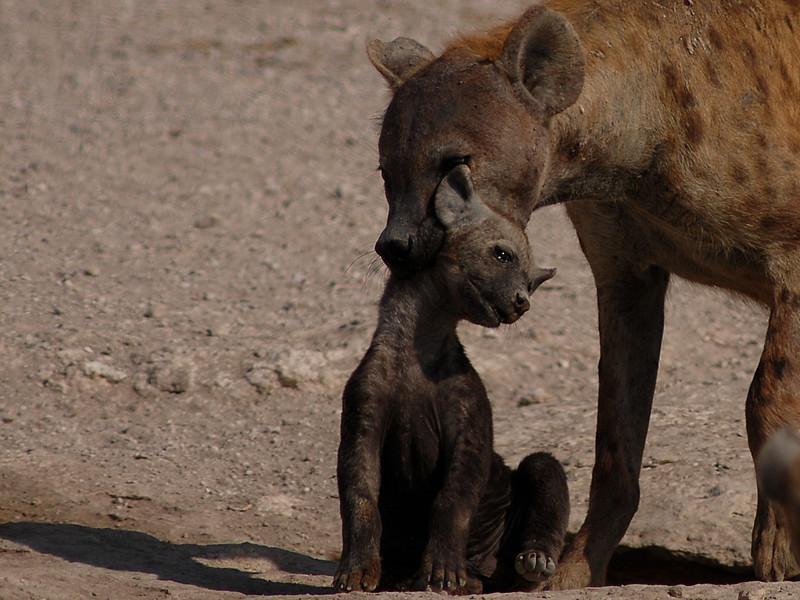 009_6916 Hyena with cub.jpg
