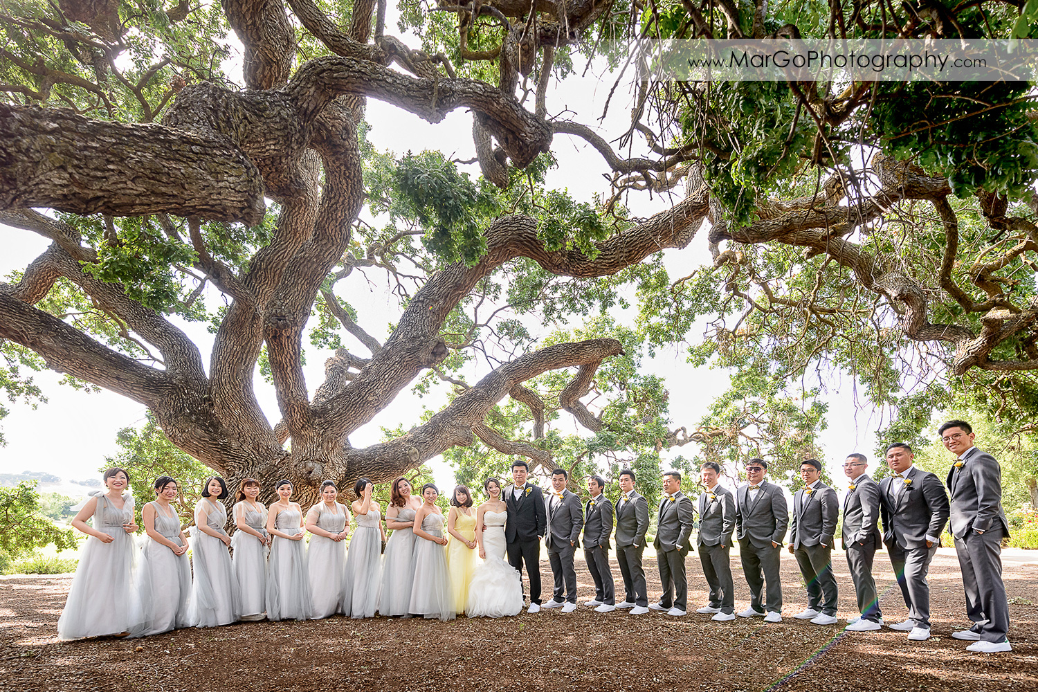 portrait of the bridal party under the tree at the Club at Ruby Hill in Pleasanton