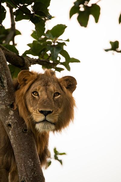 Uganda_T_QE-791.jpg