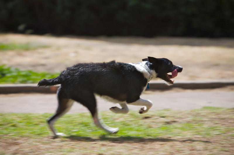 Potrero Hill Rec Center Dog Park