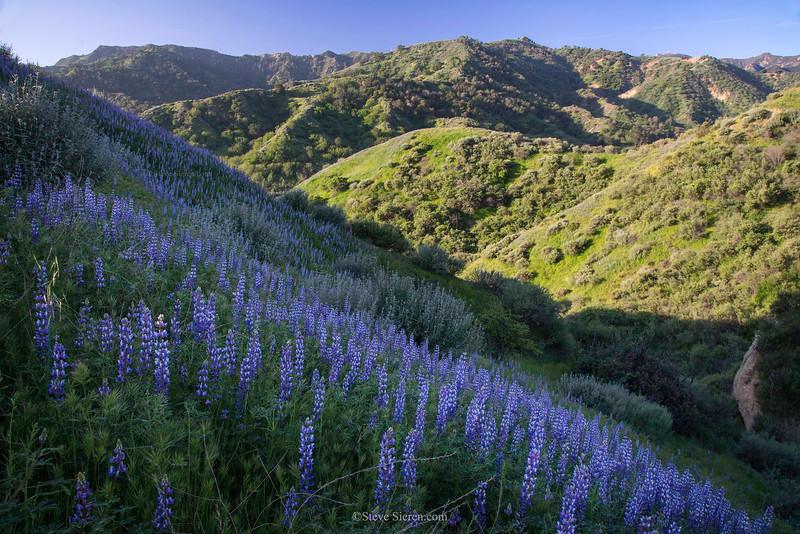 Santa_Clarita_Wildflowers_Green_Hills_Spring_Santa_Susana_Mountains_Southern_California_DSC1134.jpg