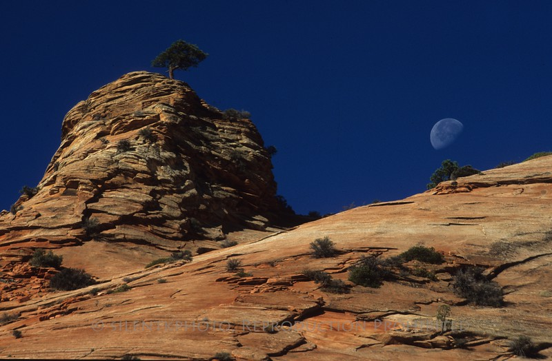 Moon Rise - Zion Canyon, Utah