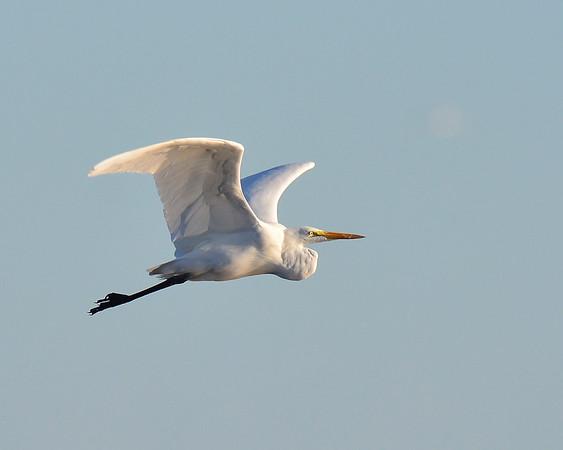 Cranes L.S. 11/10/15 PP