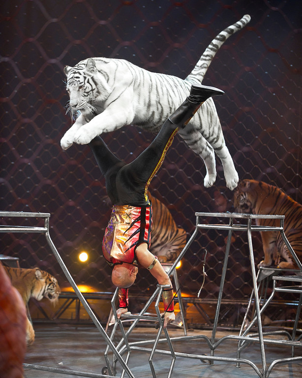". Ringling Bros. and Barnum & Bailey\'s latest circus production, ""Built to Amaze,\"" plays the Denver Coliseum Oct. 3-6 and the Pepsi Center Oct. 9-13."