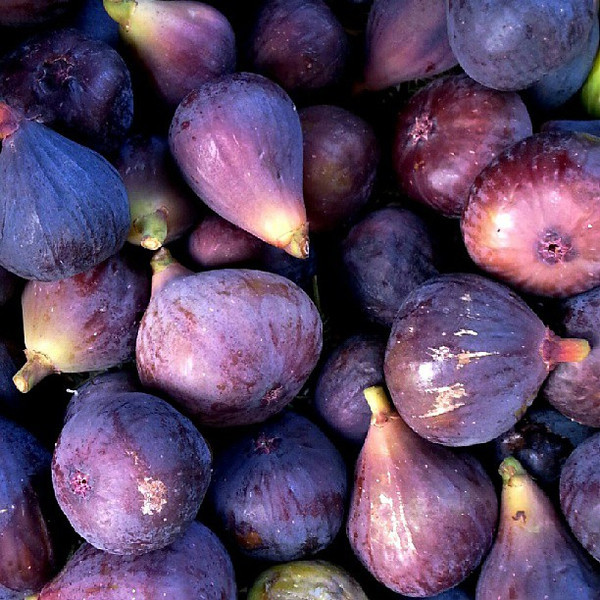 One_of_the_most_beautiful_things__InCostaBrava_is_the_abundance_of_figs._Delicious_.jpg