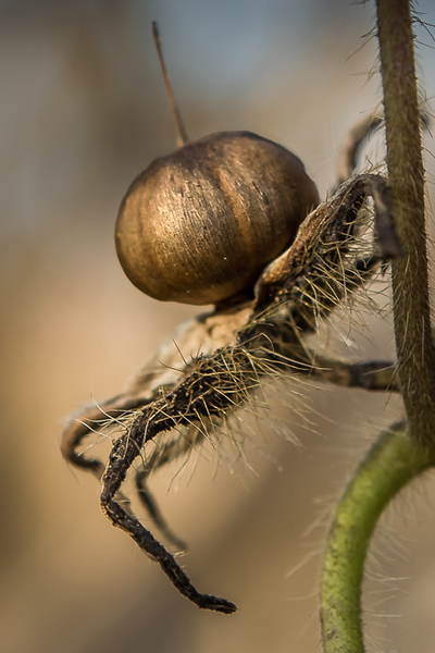 2018-Week 17 - Plant Spider.jpg