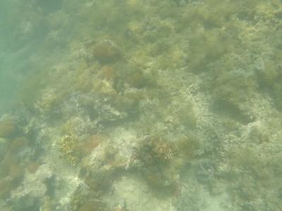 2016 Antigua