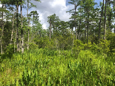 Firm Ground Swamp Options
