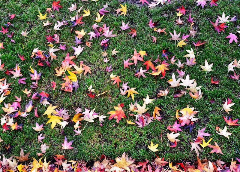 NEA_2693-7x5-Leaves.jpg