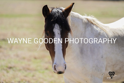 Evanescent Mustang Rescue and Sanctuary