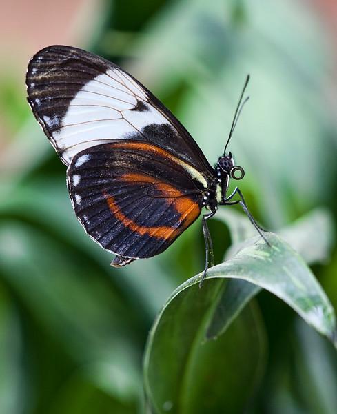 butterfly-1_3800786391_o.jpg