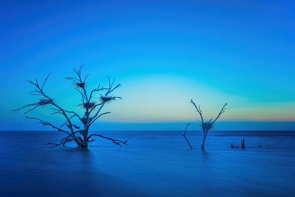 Salton Sea Trees at Sunset/Sunrise