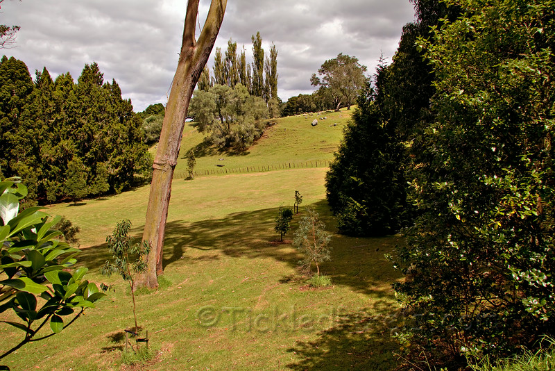 Cornwall Park and a Working Farm