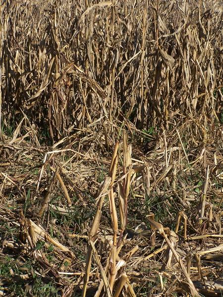 06-01-13_So_Much_Not_Corn-060.jpg