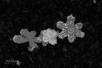 snowflakes-1653.jpg