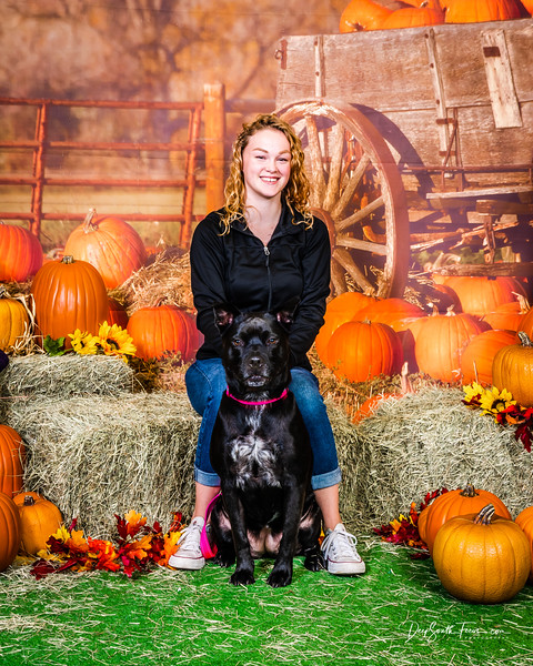 Pet Photos in the Pumpkin Patch 2019/10/20
