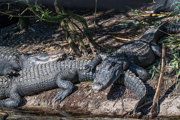 2021 Alligator Farm