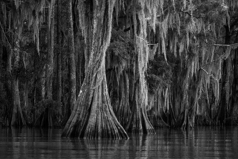 Cypress_Swamps_1117_PSokol-3035-Edit.jpg